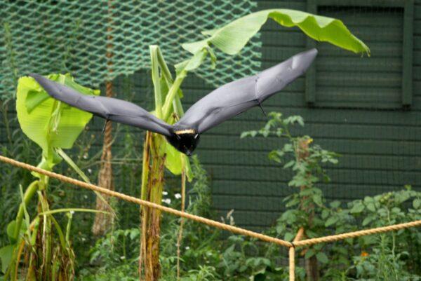 Bristol Zoo Bat Enclosure