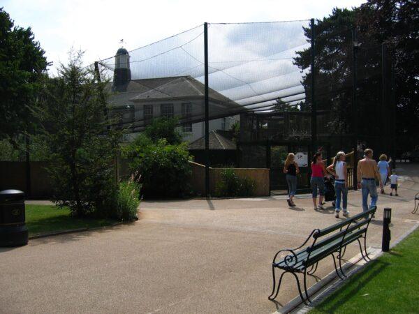Bristol Zoo Flamingo Aviary